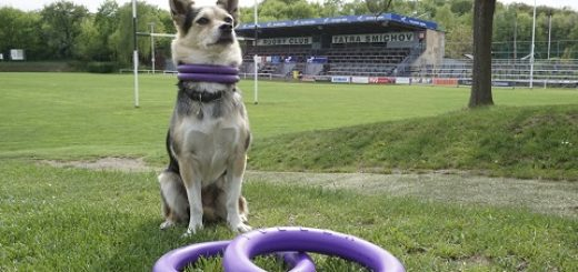World Champion of Dog Puller