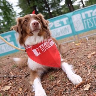 Italpet seconda dog run