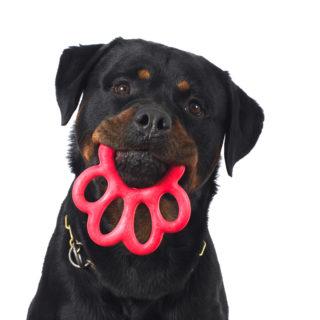Bama gioco per cani