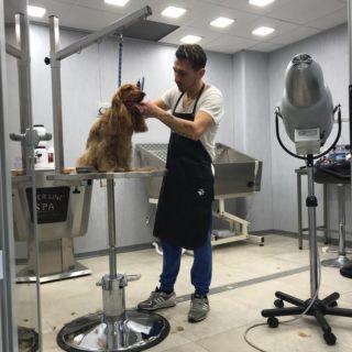 Zoe World Pet Shop Catania