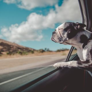 Rapporto Italia 2019 Eurispes pet friendly