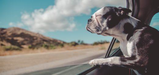 Rapporto Italia 2019 Eurispes pet friendly