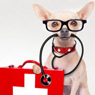 Ca' Zampa cliniche veterinarie
