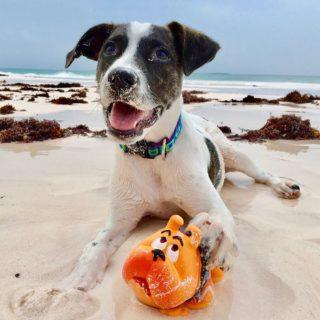 Lanco giochi naturali per cani