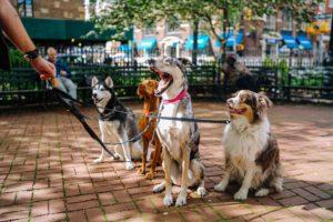 Cani Regno Unito