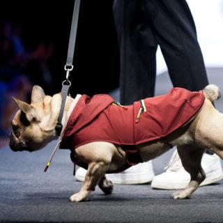 Ferribiella abbigliamento per cani