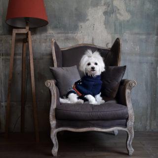 Camon abbigliamento per cani