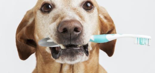 Mese Igiene Orale