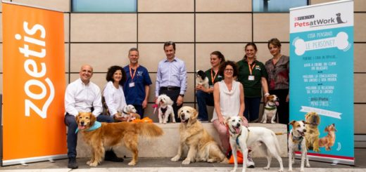 Pets at Work Alliance Purina