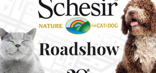 roadshow Schesir