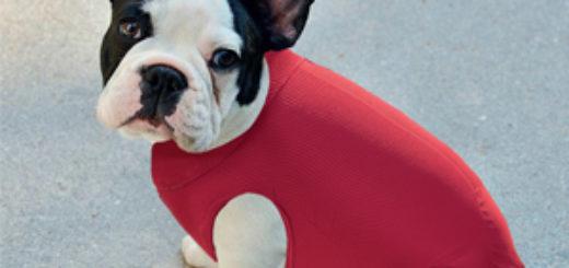 easydog maglioncino cani