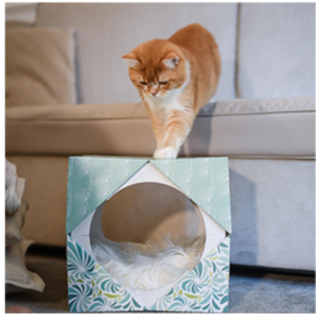 Costruire Cuccia Per Gatti schesir lancia il multipack che si trasforma in una cuccia