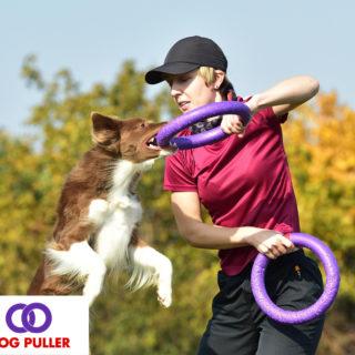 Dog Puller Online Championship