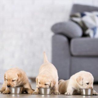 Pet food classifica mondiale