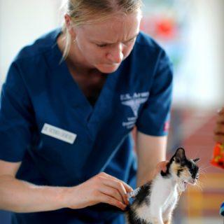 Credito d'imposta spese veterinarie