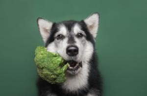 Pet B2B Luglio 2021 verdure